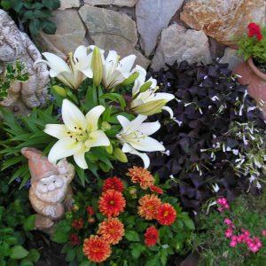 Detalle del jardín_Casa Saleros.